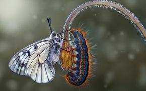 Wallpaper butterfly, caterpillar, macro, flower
