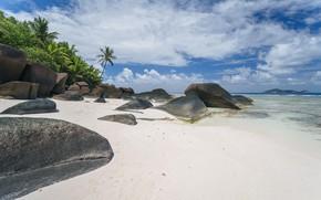 Picture sea, beach, landscape, tropics, Palma, palm trees, blue water