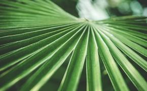 Wallpaper leaves, Palma, green