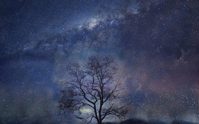 Wallpaper night, tree, stars