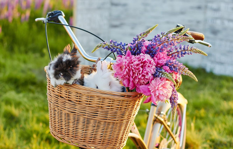 Photo wallpaper flowers, bike, rabbits, flowers, rabbits, Bicycle