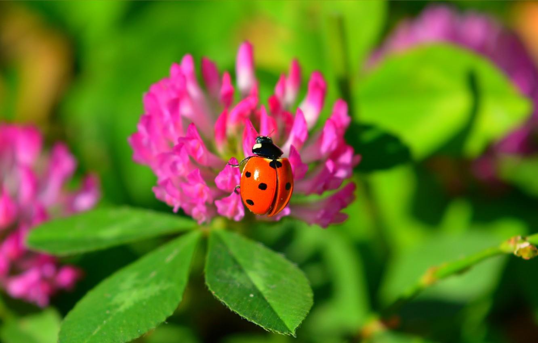 Photo wallpaper Macro, Flowers, Ladybug, Flowers, Macro, Green leaves, Green leaves