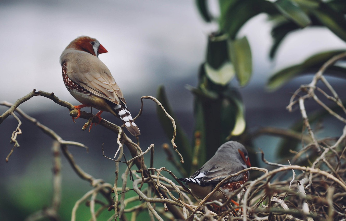 Photo wallpaper birds, branches, feathers, socket