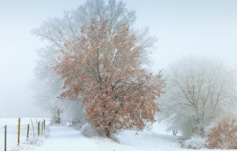 Photo wallpaper winter, snow, fog, tree
