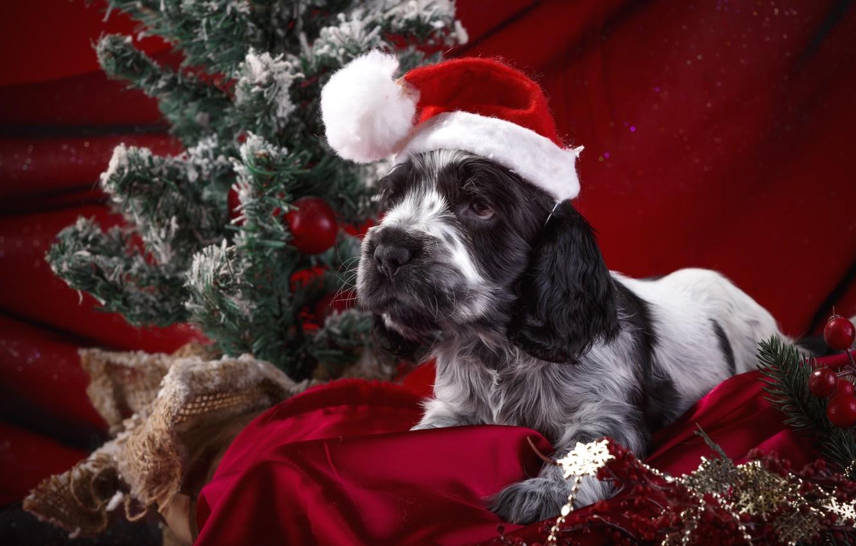 Photo wallpaper holiday, hat, puppy, pillow, Spaniel, decor