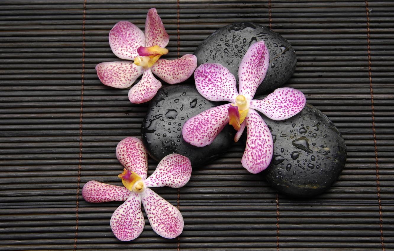 Photo wallpaper drops, flowers, stones, orchids