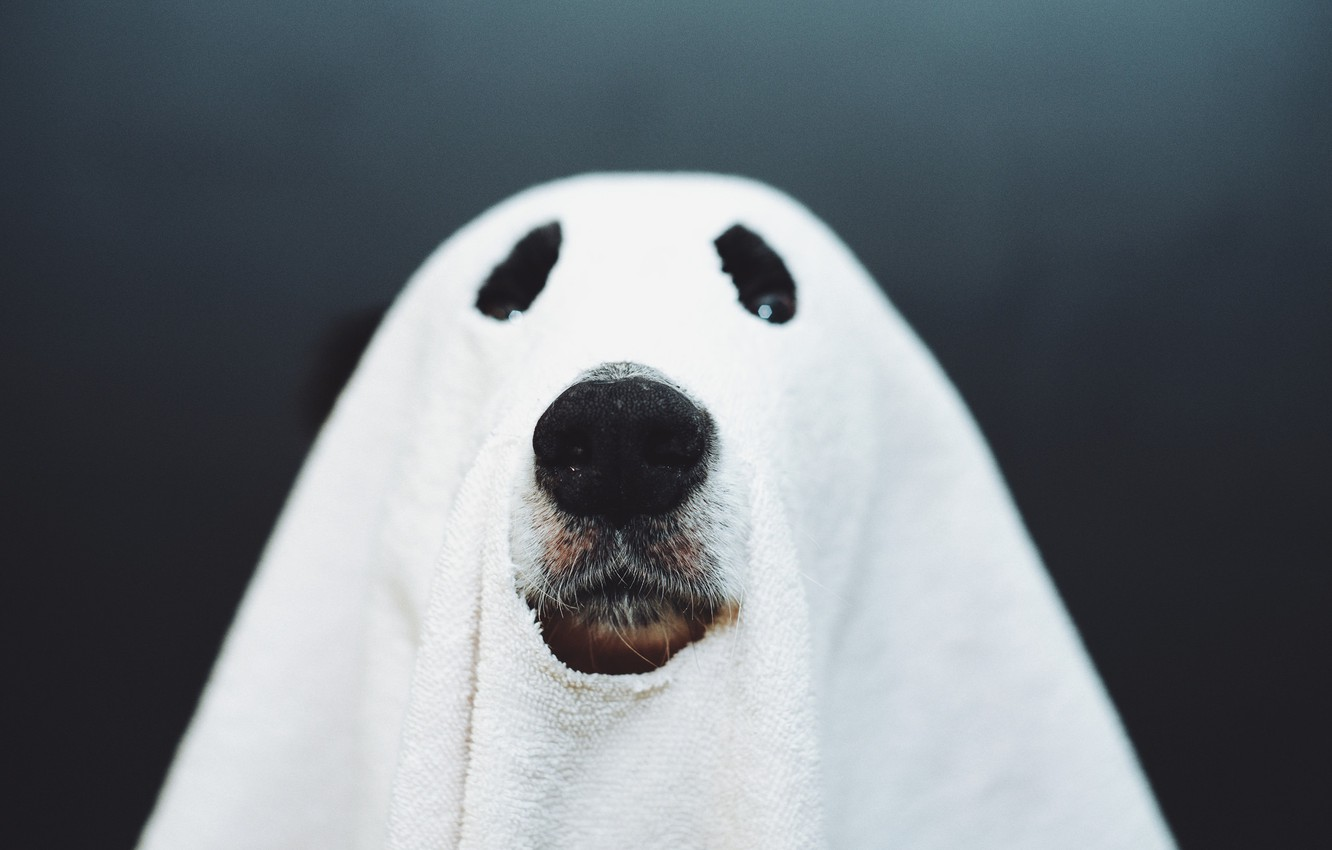 Photo wallpaper dog, nose, Ghost