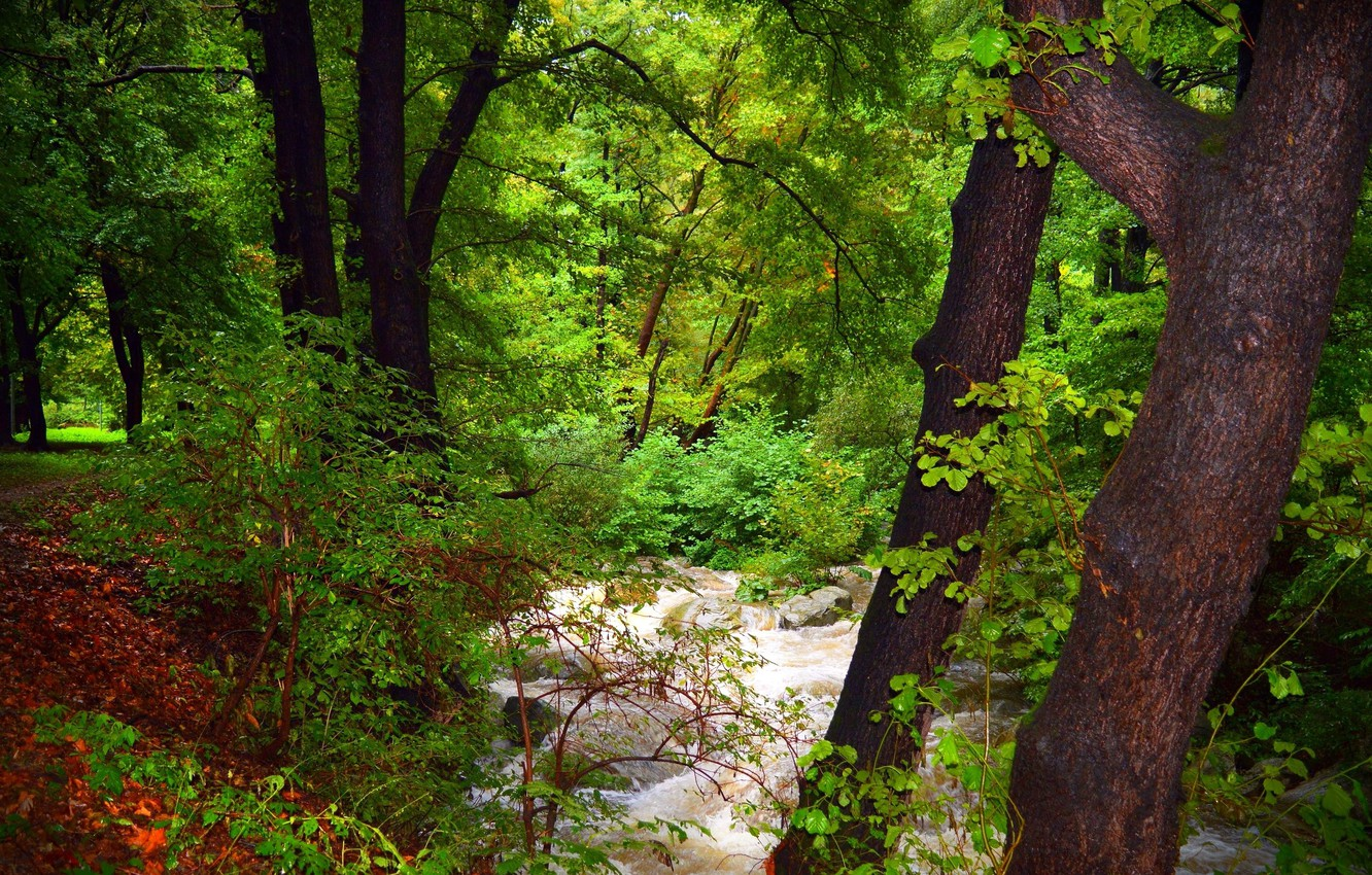 Photo wallpaper Stream, Forest, Nature, River, River, Forest