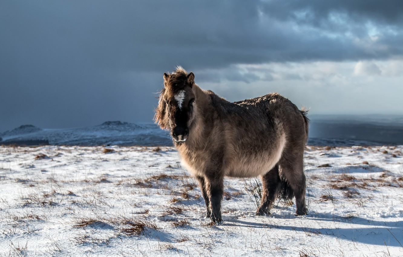 Photo wallpaper winter, field, horse