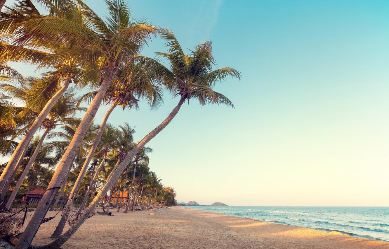 Photo wallpaper sand, beach, summer, tropics, palm trees, stay, shore