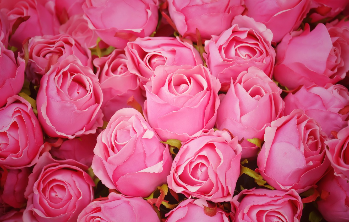 Photo wallpaper flowers, roses, pink, buds, pink, flowers, romantic, roses, cute