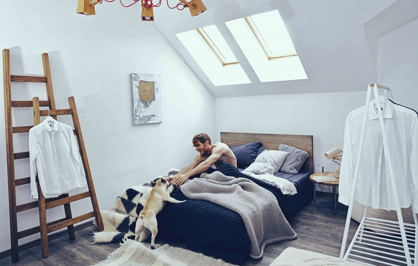 Wallpaper comfort, interior, dog, male, bedroom, Scandinavian style ...