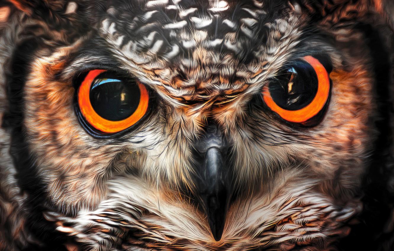 Photo wallpaper look, owl, bird, beak, eyes