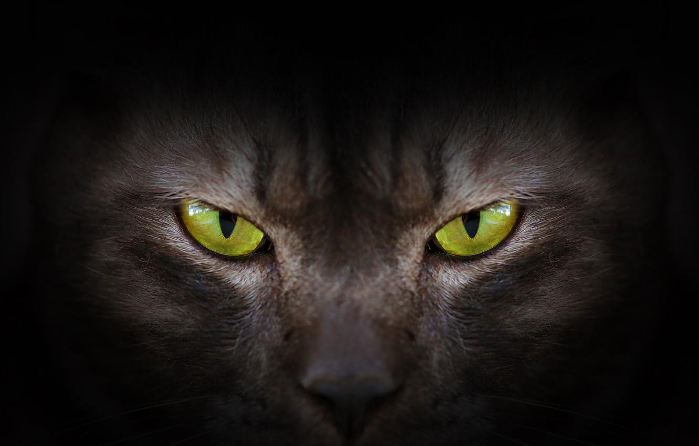 Photo wallpaper eyes, look, green, black, eyes, cat, black cat