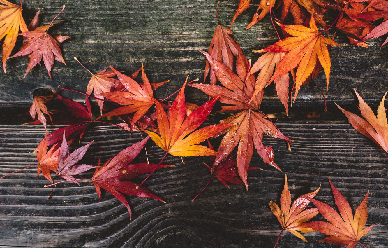 Photo wallpaper autumn, leaves, red