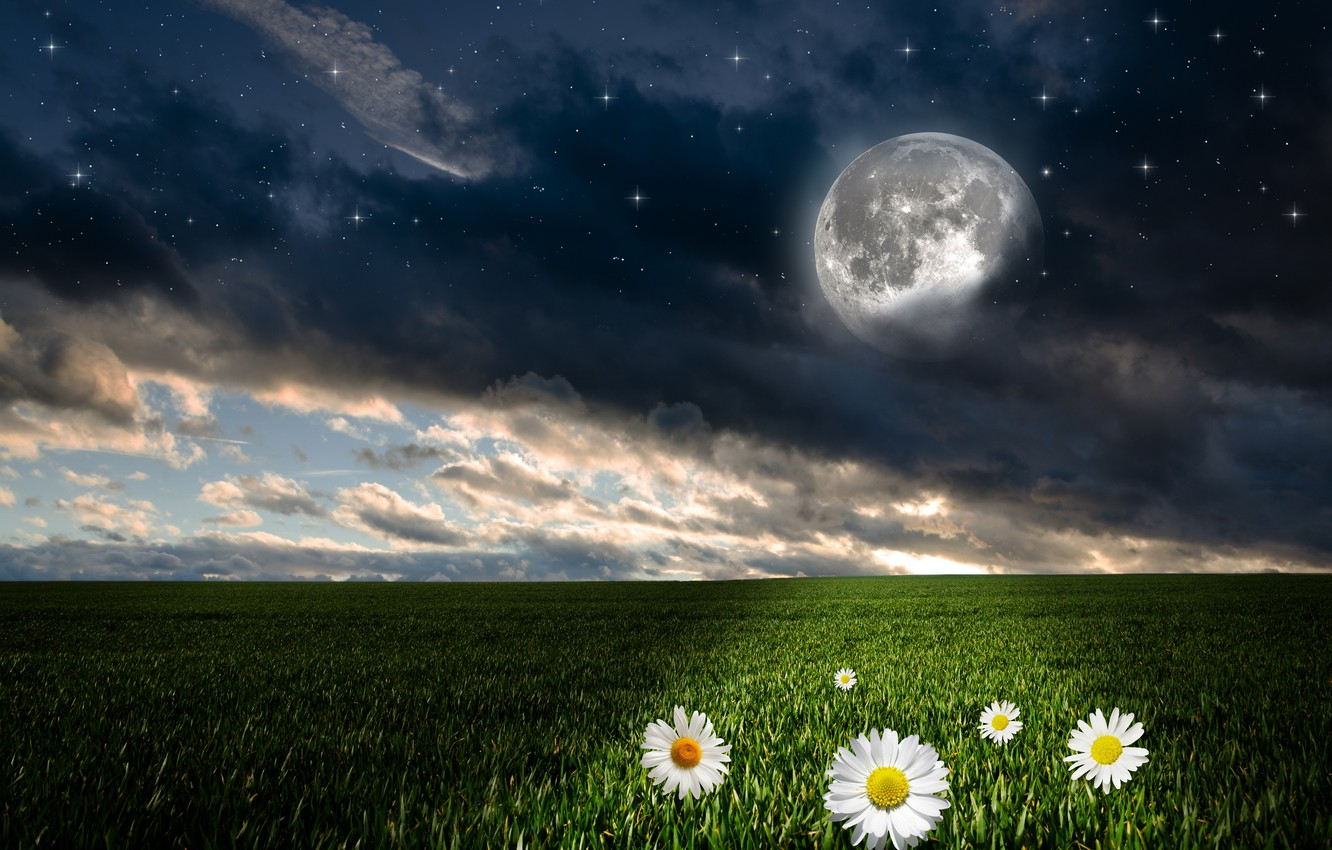 Photo wallpaper greens, field, the sky, grass, clouds, flowers, night, the moon, photoshop, chamomile, stars, horizon, fantasy, …