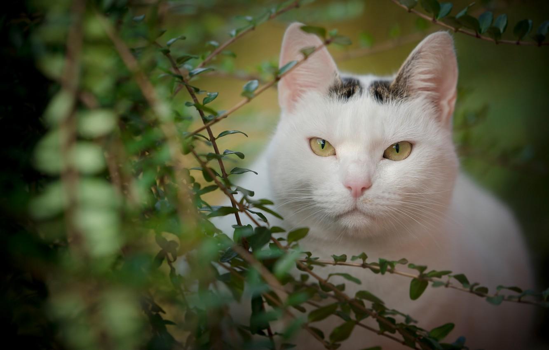 Photo wallpaper cat, look, leaves, branches, portrait, muzzle, beauty