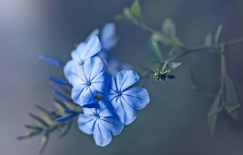 Photo wallpaper macro, nature, plant, petals