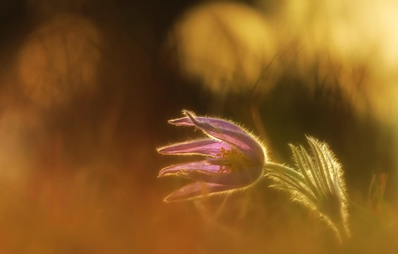 Photo wallpaper flower, nature, spring