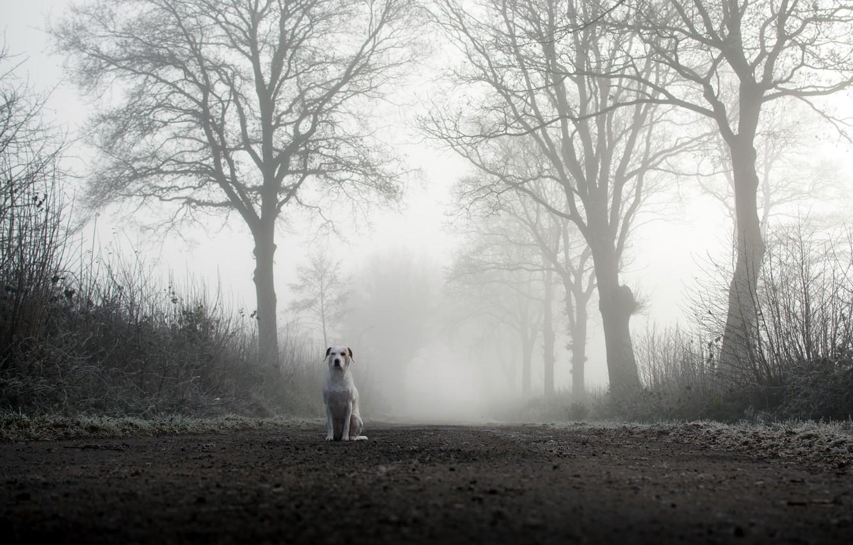 Photo wallpaper road, fog, dog