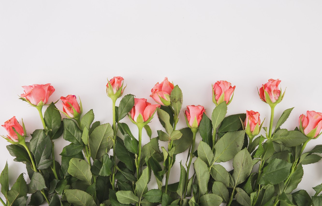 Photo wallpaper Flowers, Buds, Roses