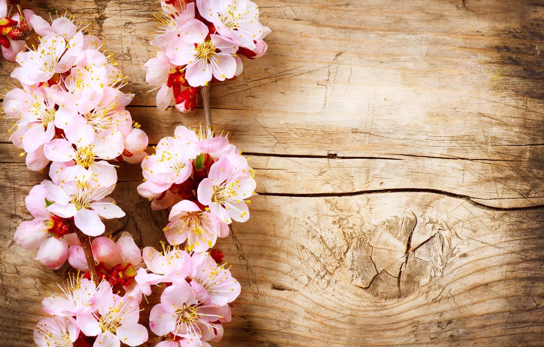 Photo wallpaper tree, branch, wood, flowers
