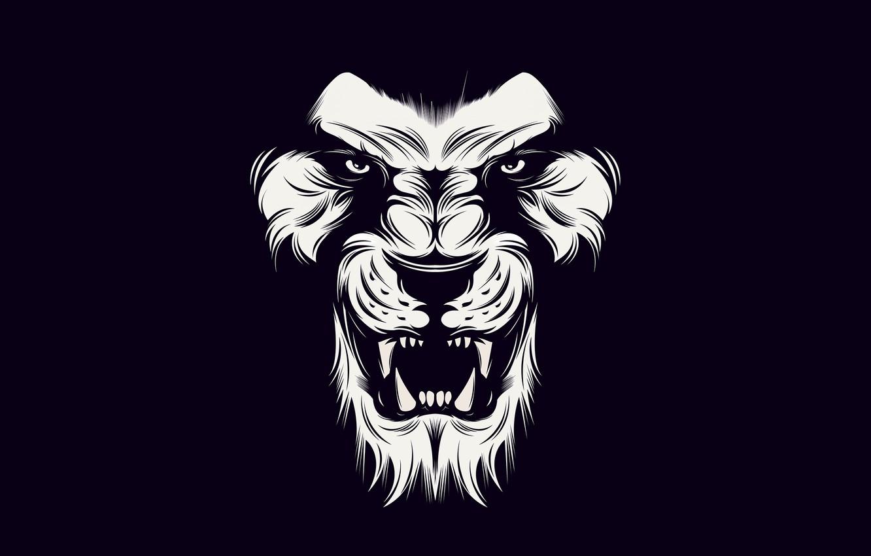Wallpaper Black Lion White Images For Desktop Section