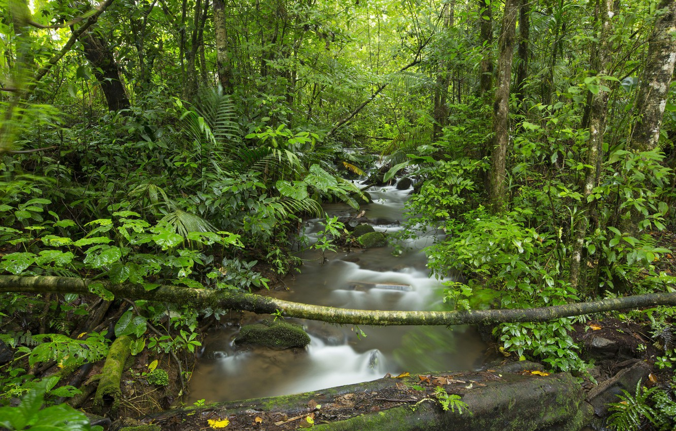 Photo wallpaper trees, nature, river, stream, Forest