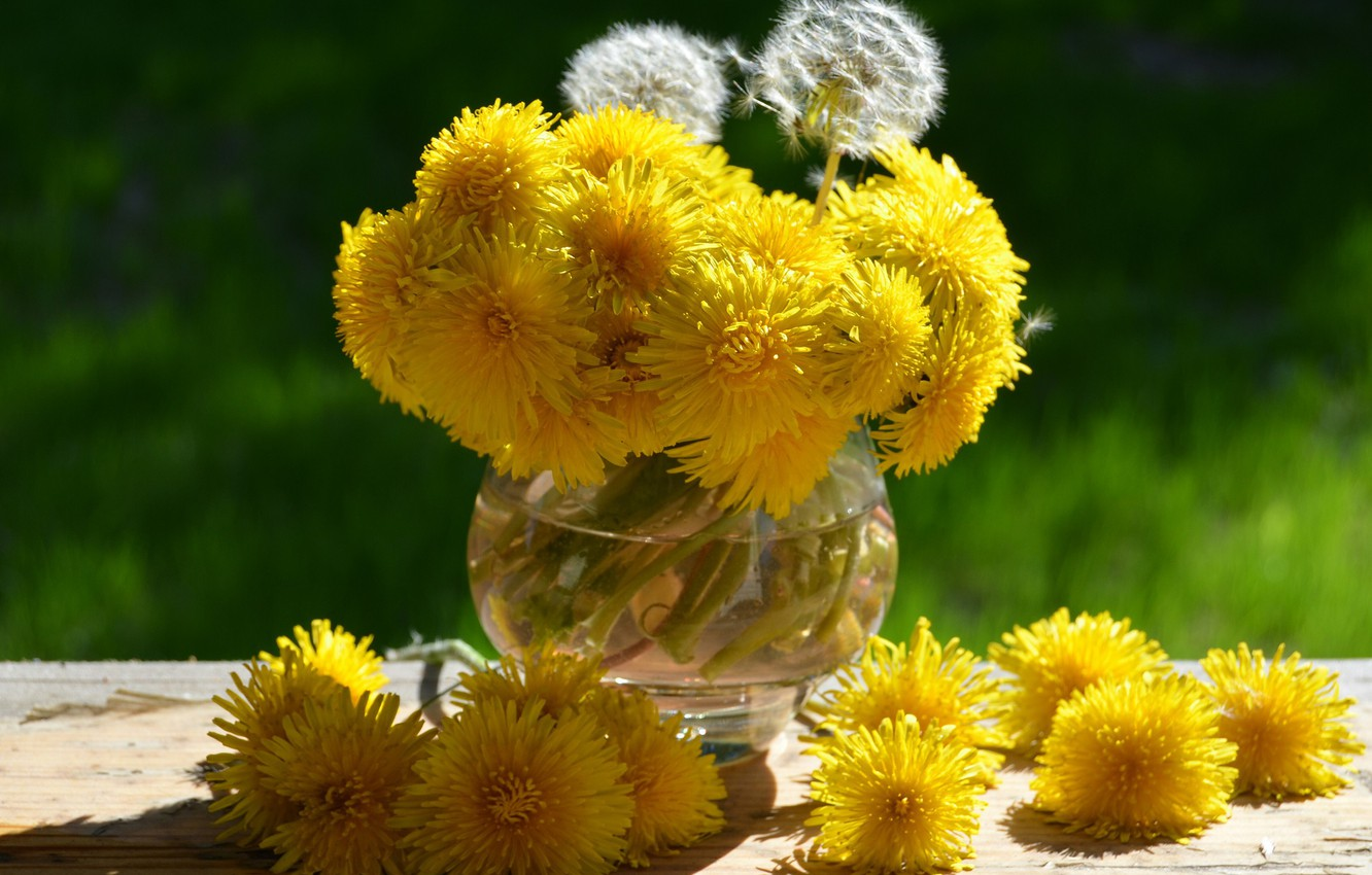 Photo wallpaper summer, macro, flowers, photo, dandelion, plants, garden, still life, Russia, dandelions, etude