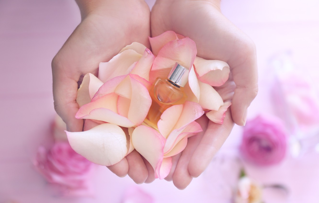 Photo wallpaper perfume, petals, rose, pink, petals, pink roses