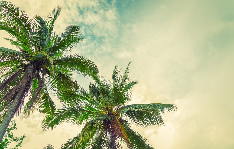 Photo wallpaper beach, summer, the sun, palm trees, summer, beach, paradise, palms, tropical