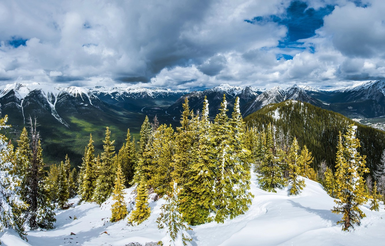 Photo wallpaper winter, forest, clouds, snow, trees, mountains, Alps, forest