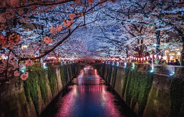 Photo wallpaper light, flowers, night, the city, lights, people, spring, Japan, Sakura, channel