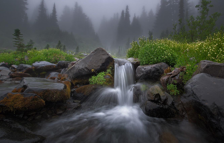 Photo wallpaper forest, summer, flowers, nature, fog, river, stones, rocks, stream, haze