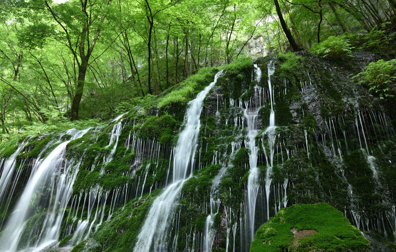 Photo wallpaper forest, water, nature, stones, vegetation, waterfall, moss