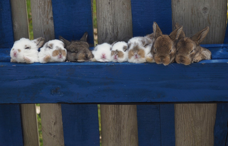 Photo wallpaper the fence, rabbits, kids, rabbits
