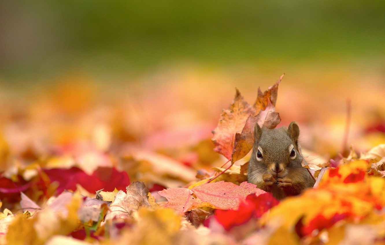 Photo wallpaper autumn, leaves, nature, protein
