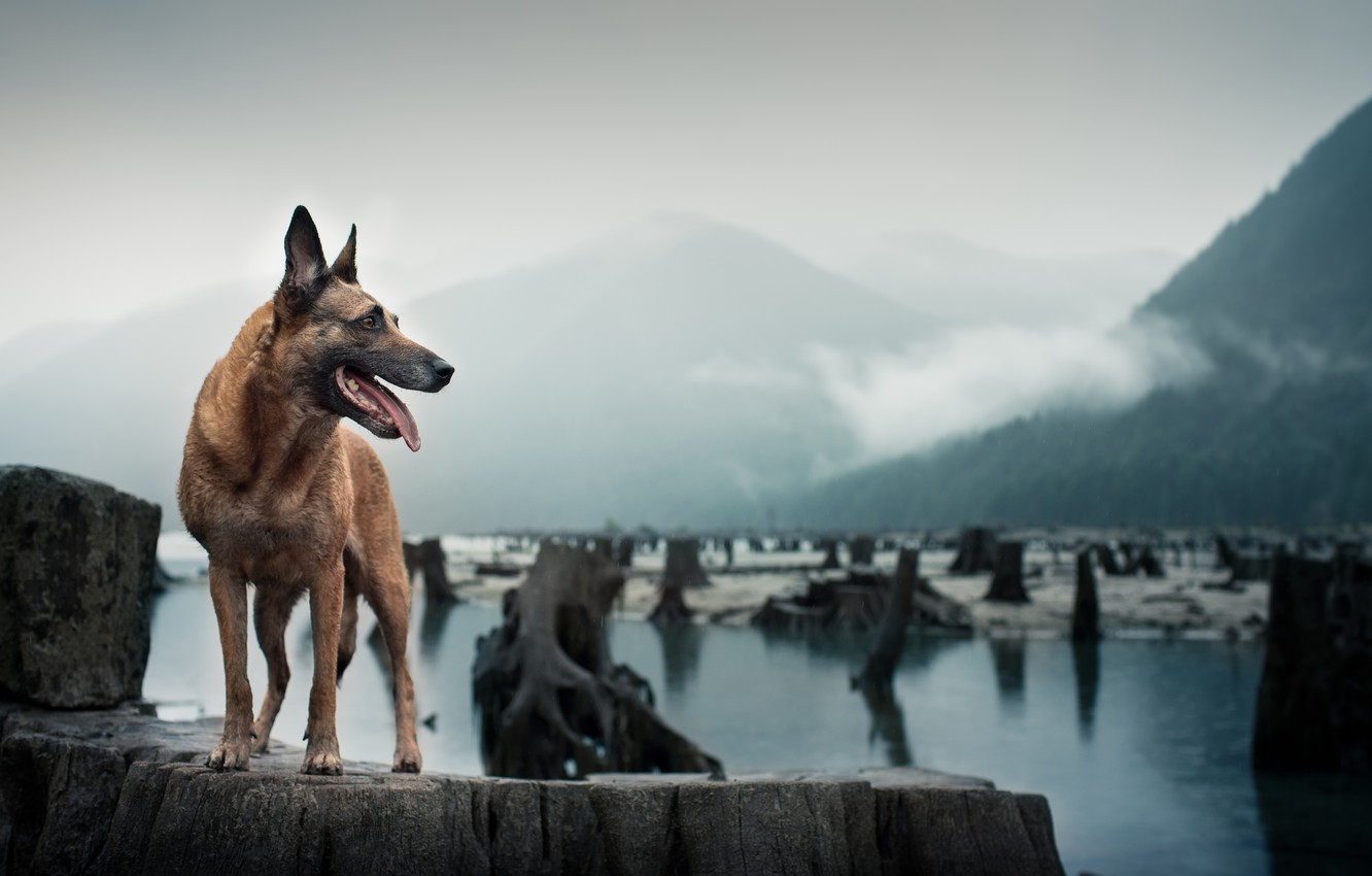 Photo wallpaper look, each, dog