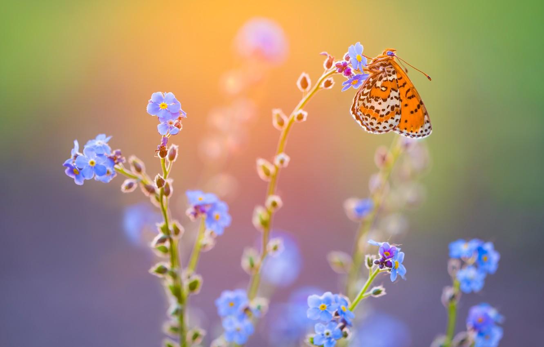 Photo wallpaper macro, light, flowers, butterfly