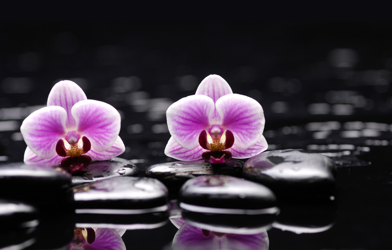 Photo wallpaper water, flowers, stones, Orchid