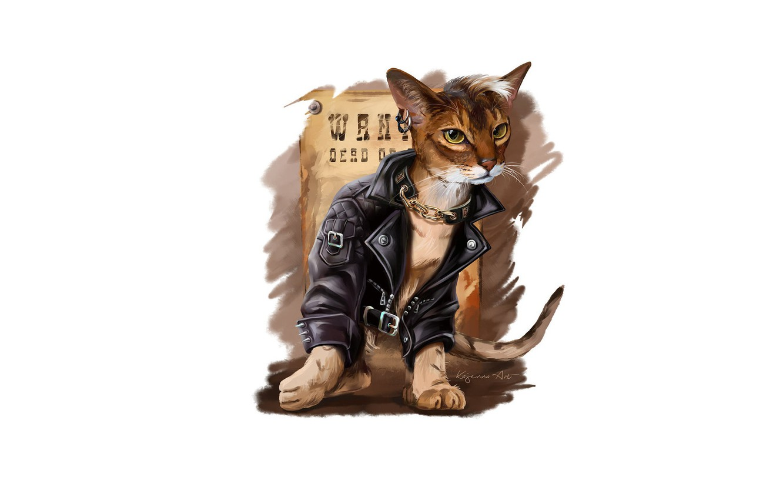 Photo wallpaper cat, style, jacket