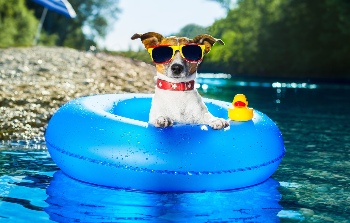 Photo wallpaper water, round, dog, glasses, Jack Russell Terrier