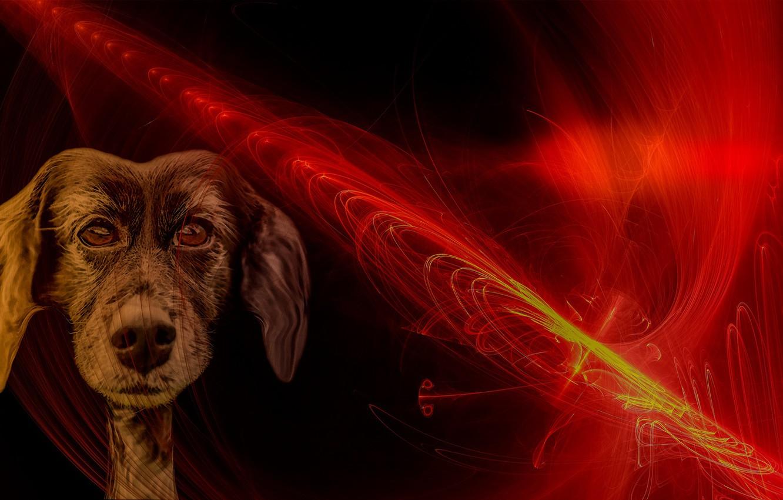 Photo wallpaper line, fire, dog, muzzle, dog