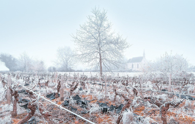 Photo wallpaper winter, frost, fog, vineyard