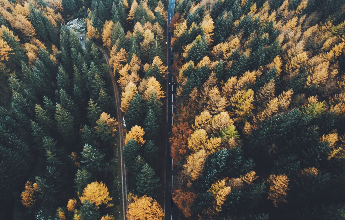 Photo wallpaper road, autumn, forest, trees, nature, the view from the top