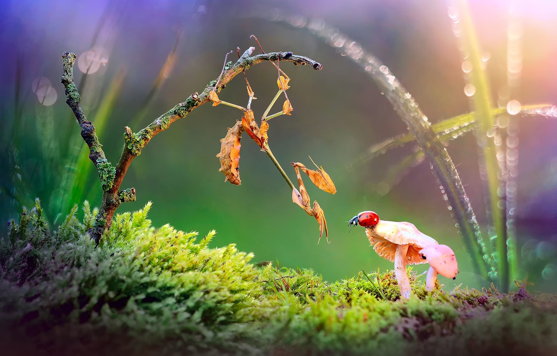 Photo wallpaper grass, light, Rosa, glare, mushrooms, ladybug, moss, beetle, branch, mantis, bokeh, macrocosm