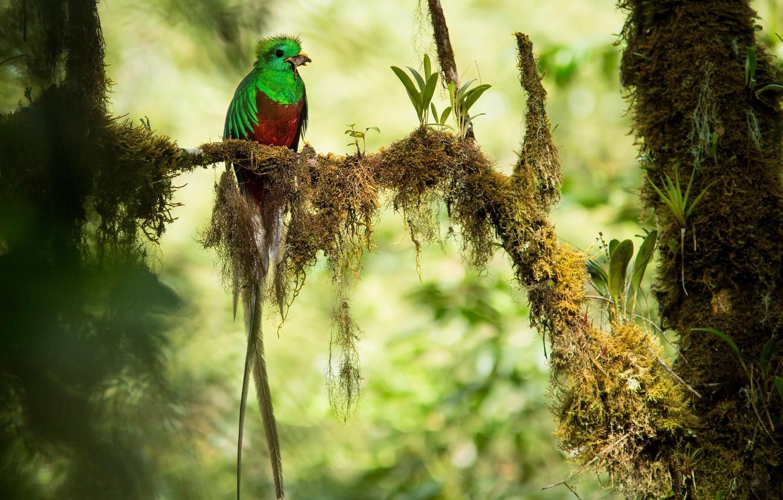 Best 31 Quetzal Wallpaper On Hipwallpaper Quetzal Rainbow Background Quetzal Wallpaper And Quantal Quetzal Wallpaper