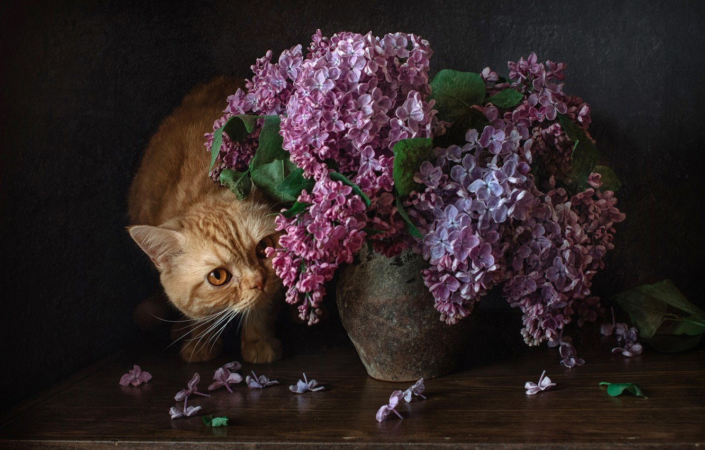 Photo wallpaper bouquet, lilac, red cat, cat