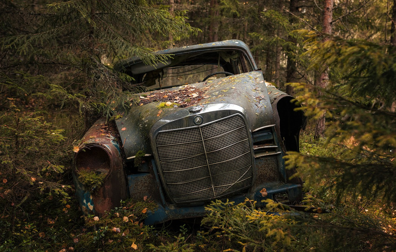 Photo wallpaper machine, forest, scrap