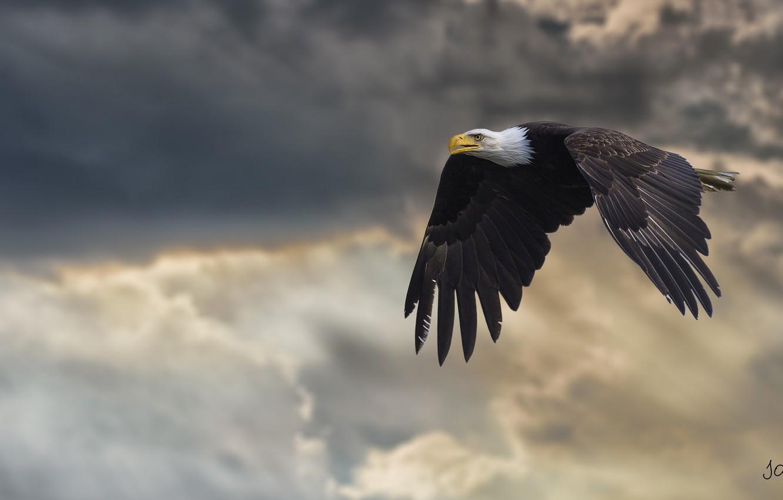 Photo wallpaper wings, power, flight, bald eagle, bird of prey